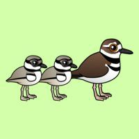 Killdeer & two chicks