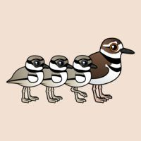 Killdeer & three chicks