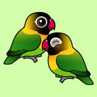 Masked Lovebird Adorable Pair