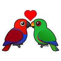 Eclectus Parrots in Love