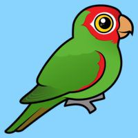 Birdorable Red-masked Parakeet
