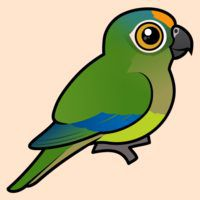 Birdorable Peach-fronted Parakeet