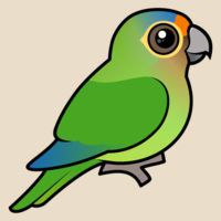 Birdorable Orange-fronted Parakeet