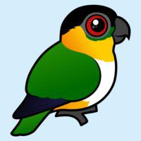 Birdorable Black-headed Parrot