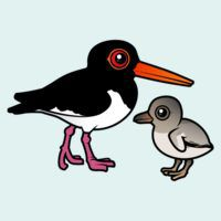 Pied Oystercatcher with chick