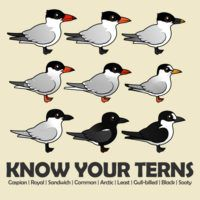 Know Your Terns
