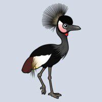 Black Crowned-Crane