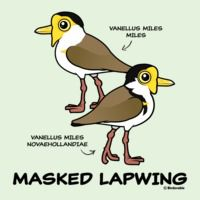 Masked Lapwing subspecies