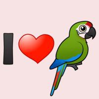 I Love Great Green Macaws