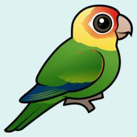 Birdorable Carolina Parakeet
