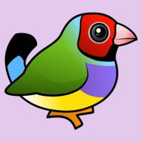 Birdorable Gouldian Finch