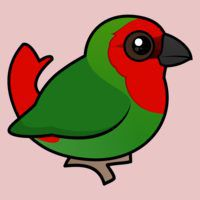 Red-headed Parrotfinch