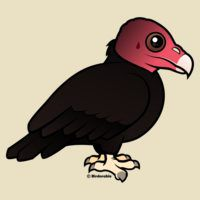 Birdorable Turkey Vulture