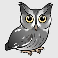 Eastern Screech Owl (Gray Phase)