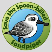 Save the Spoon-billed Sandpiper