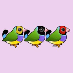 Three Gouldian Finches