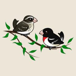 Rose-breasted Grosbeak Couple