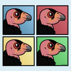 Four Color California Condor