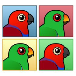 Four Color Eclectus Parrots