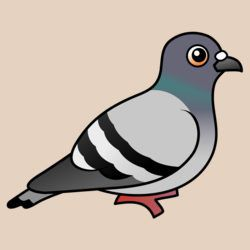 Customizable Rock Pigeon