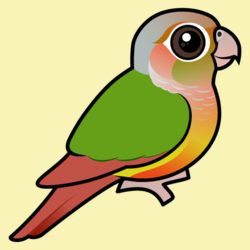 Pineapple Green-cheeked Conure