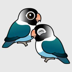 Blue Masked Lovebirds Adorable Pair
