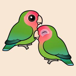Peach-faced Lovebird Adorable Pair