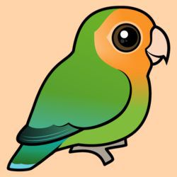 Orange-faced Green Lovebird