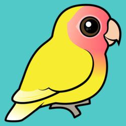 Lutino Peach-faced Lovebird
