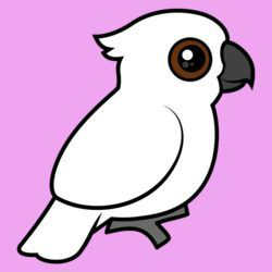 Umbrella Cockatoo (flat)