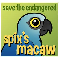 Save the Endangered Spix's Macaw