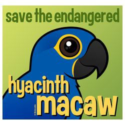 Save the Endangered Hyacinth Macaw