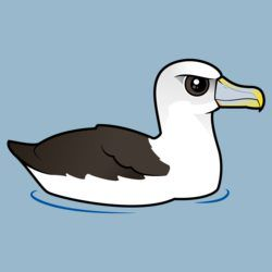 Birdorable Shy Albatross