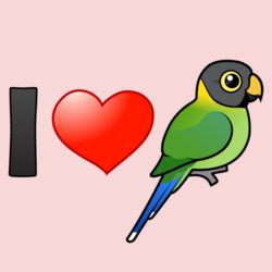 I Love Plum-headed Parakeets (female)