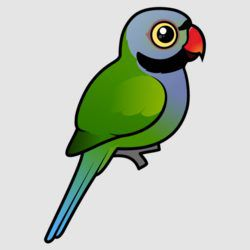 Birdorable Derbyan Parakeet