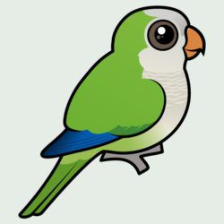 Birdorable Monk Parakeet