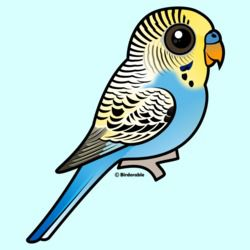 Customizable Blue & Yellow Budgie