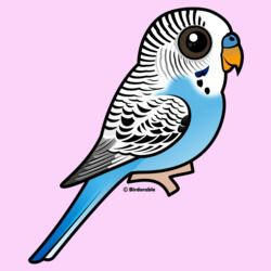 Cute Blue Budgie