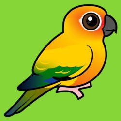 Birdorable Sun Parakeet