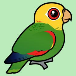 Birdorable Yellow-headed Amazon
