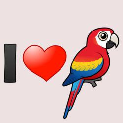 I Love Scarlet Macaws