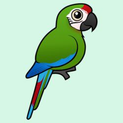 Birdorable Military Macaw