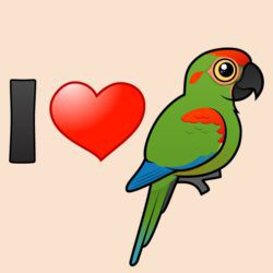 I Love Red-fronted Macaws