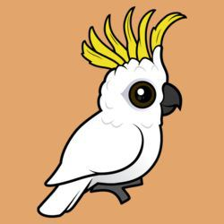 Sulphur-crested Cockatoo crest raised