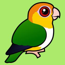 Birdorable White-bellied Parrot