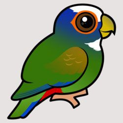 Birdorable White-crowned Parrot