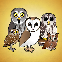 Five Birdorable Owls