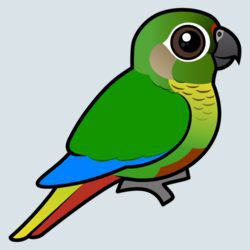 Birdorable Maroon-bellied Parakeet