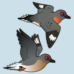 Passenger Pigeon Flight