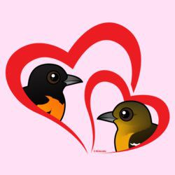 Baltimore Oriole Love